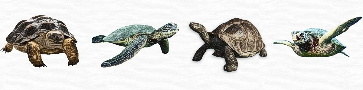 kinds of turtles
